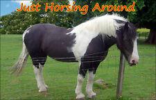 Piebald Horse Fridge Magnet, Horsing Around!