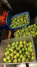 Lot of 200 Used Tennis Balls. Free Shipping
