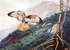 Lofty View by Charles Frace Redtailed Hawk Print 32x24
