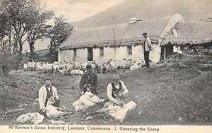 Leenane Connemara Ireland M'Koewn's Home Industry Shearing Sheep PC AA41351