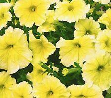 Petunia Prizm Sunshine 40 Pelleted Seeds  Garden Seeds 2u