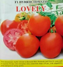 Tomato Tropical Vegetable Plant Seeds