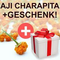 Aji Charapita 20 SAMEN seeds + GESCHENK! teuerste Chili der Welt, beste Qualität