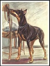 DOBERMAN PINSCHER LOOKS AT HIS LEAD HOPING FOR A WALK GREAT DOG PRINT POSTER