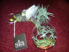 SIA HOME FASHION orchidée artificielle en eau magique à suspendre neuve