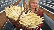 Seeds Salad Lettuce Asparagus Orientaliska Wild Vegetable Organic Ukraine