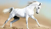 Framed Print - Pure White Arabian Horse Running in the Sand (Picture Poster Art)
