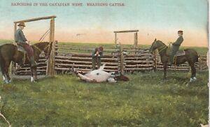 Horse, Canada  Post Card 1911,