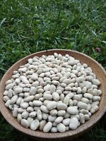 Organic Mucuna Pruriens Seeds, 15 Seeds