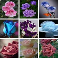 100pcs 9 Colors Blooming Rose Garden Courtyard Flowers Seed Bonsai Plants Potted