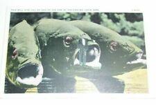 Novelty Fishing vintage Postcard  T*