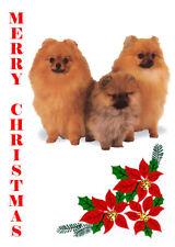 POMERANIAN SINGLE DOG PRINT GREETING CHRISTMAS CARD