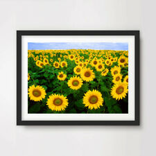 Sunflower Field FLOWERS FLORAL PHOTOGRAPHY ART PRINT Decor Wall Nature Sunny