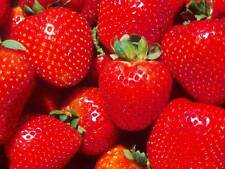 PHOTO FRUIT STRAWBERRY RED JUICY FOOD POSTER ART PRINT PICTURE BB277B