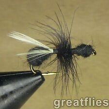 1 dozen (12) - Flying Black Ant