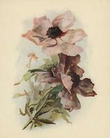 ANTIQUE VICTORIAN PINK POPPIES FLOWERS BOTANICAL COLOR CHROMOLITHOGRAPH PRINT