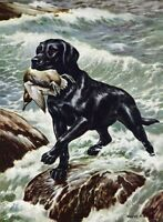 Black Labrador Retriever - Vintage Color Dog Print - MATTED