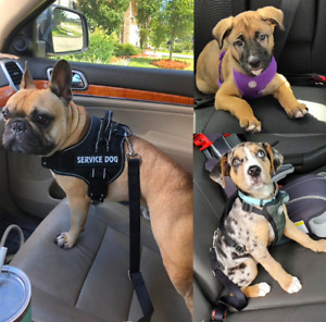 Dog/Cat/Pup Pet Safety Adjustable Seat Belt for Car Heavy Duty Harness Leash NEW