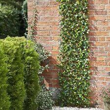 180cm x 90cm Lemon Leaf Expanding Garden Trellis Ideal for Fencing & Wall Decor