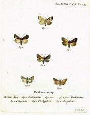 Esper Phaelen MOTHS (CXXX)  Engraved by J.C. Bock  Hand Colored Engraving 1776