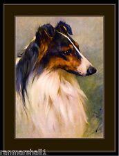 English Picture Print Scotch Collie Dog Head Study Art