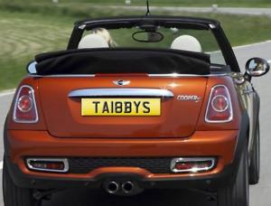 TABBY TABBYS