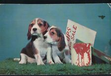 "2BitPostcard-A174 1950's-60's ""Beagles-Pups for Sale"" Effort, Pa. Colourpictures"