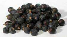 Juniper Berries 1 oz. ~ Wicca Pagan Herb Healing