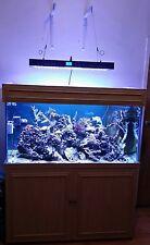 Marine Full Setup Aquarium 4ft Fish Tank inc fishes and live rock tongo branch
