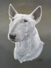 ENGLISH BULL TERRIER DOG Print-Approx 16 x 12