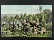English HOP PICKING A Set of Home Pickers c1906 Postcard by Millar & Lang