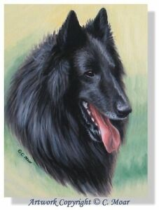 Belgian Shepherd Sheepdog Dog Headstudy Limited Edition Art Print Groenedael