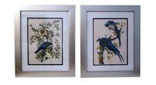 Framed, vintage botanical bird prints