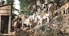 "Giclee Art Print of c. 1904 Photo ""Colorado Burros At Silver Mine"" 6 X 10"