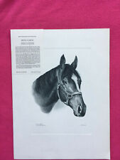 VINTAGE print PROUD CLARION kentucky derby winner CHARCOAL DRAWING wallner 1967
