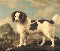 "1778 Water Spaniel, DOG, Antique ART GEORGE STUBBS, 14""x11"" Art print"