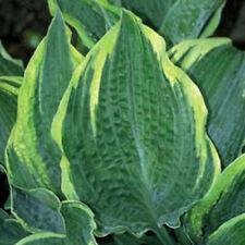 Summer bushy perennial flower plant seeds ebay spring bushy perennial flower plant seeds mightylinksfo