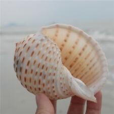 Natural Conch Shell Aquarium Fish Tank Ornament Landscape Sea Snail Decor Gift