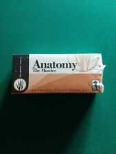 Vintage Visual Education Academic Study Card Anatomy the Muscles Sealed!