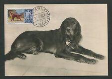 SAN MARINO MK 1956 HUNDE DOGS IRISH SETTER CARTE MAXIMUM CARD MC CM d7675