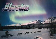 Alaska Northern Lights Aurora Borealis Dog Team Mushing Sled Susitna AK Postcard