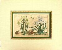 Very Rare Crispin De Passe Antique Botanical Print: Holland, 1614-1617: De Passe
