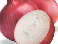 ONION SEEDS BRUNSWICK RED (APPROX 150 SEEDS) EXCELLENT GARDEN VEGETABLE