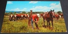Vintage Postcard Cowboy Fence Repair Whiteface Cattle