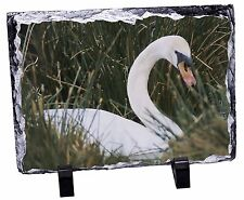 Swan in Grass Land Photo Slate Christmas Gift Ornament, AB-90SL