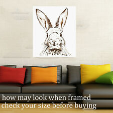 Vintage Print art Framed Canvas Bunny rabbit drawing painting old hare