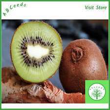 Green kiwi fruit seeds - (Actinidia deliciosa) - small scoop