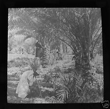 MAGIC LANTERN SLIDE EGYPT NO.9 C1910 PYRAMIDS EGYPTIAN LIFE NILE