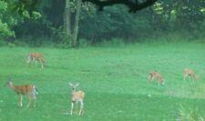 ALFALFA & CLOVER MIX, Deer Plot Seeds Wildlife Forage Seed 1 lb Ground Clover
