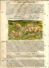 Stampa antica ERBARIO MATTIOLI MATTHIOLI Toporagno Shrew 1568 Old antique print